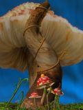 蘑菇场景3D模型