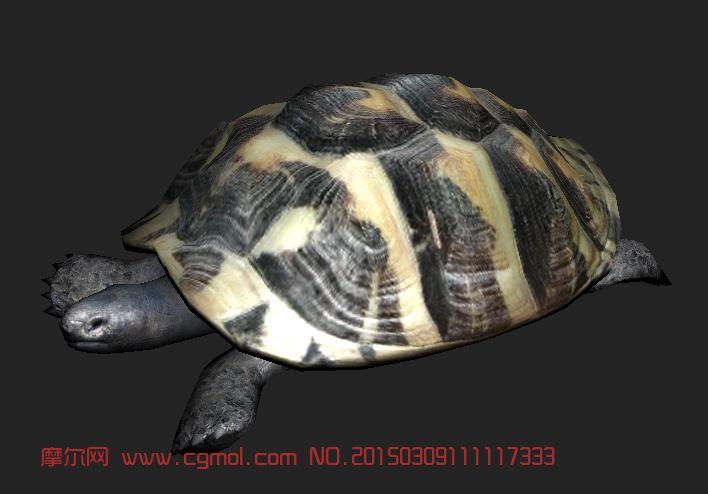 大乌龟_爬行动物_动物模型