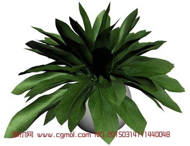 绿植_花草模型_植物模型