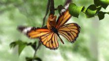 蝴蝶破茧而出动画3D模型