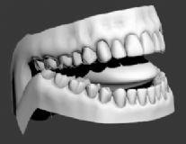 口腔牙齿模型
