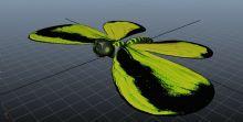昆虫 蝴蝶
