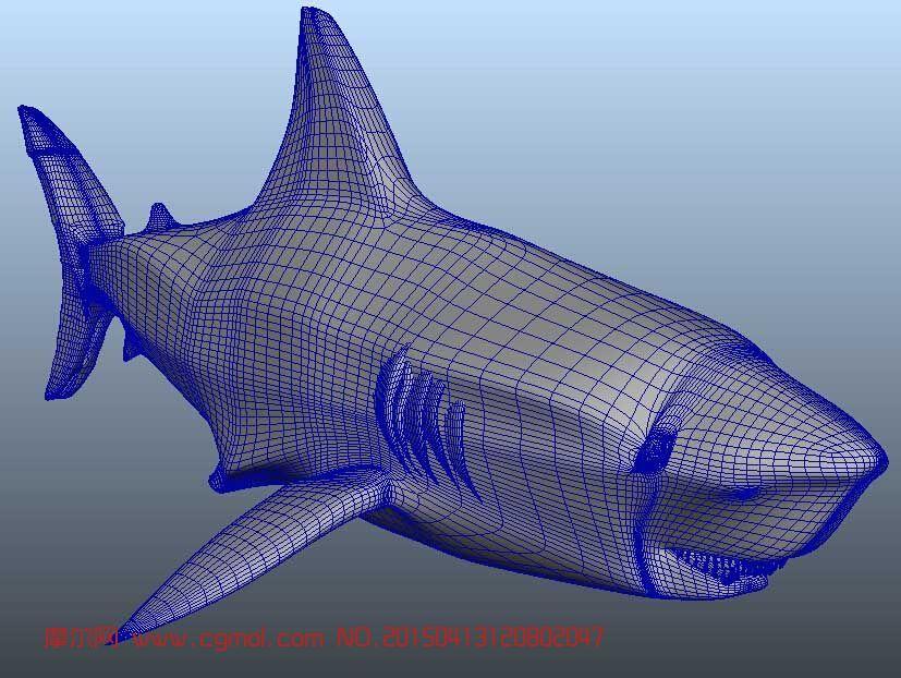 模型 鱼类动物  关键词:大白鲨鲨鱼