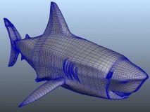 鲨鱼maya模型