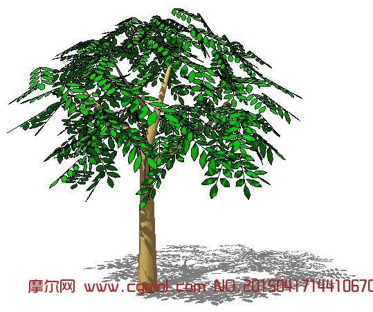 银杏大树3d模型_树木模型_植物模型_3d模型,3d素材