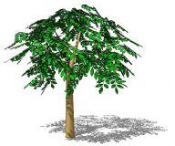 银杏大树3D模型