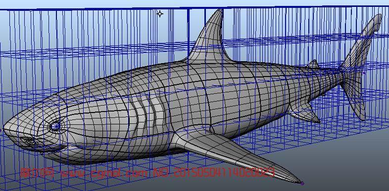 鲨鱼3d模型_鱼类动物_动物模型