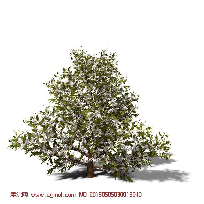 开花的树,梨树_树木模型