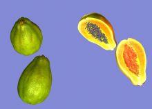木瓜3D模型