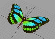 蝴蝶模型附贴图
