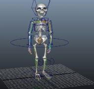 带绑定走路的骷髅Maya模型