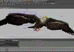 飞翔的大鹰maya模型,绑定好