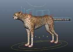 豹子maya模型