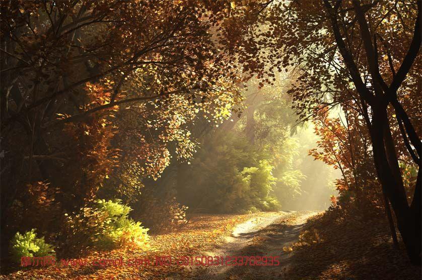 秋天森林的阳光早晨场景3D模型