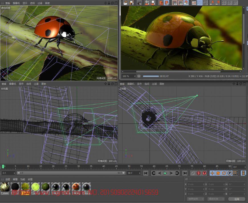 动物模型 昆虫  标签:七星瓢虫 作品描述: 作者其他作品 上一个作品