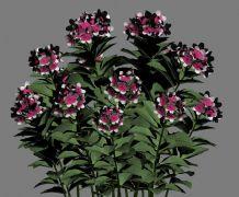 漂亮的园林花卉max模型(max2009,带贴图)