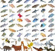 各类鱼及少量动物