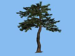 简模-松树max模型,可做中远景用