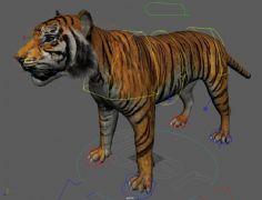 老虎带绑定maya模型