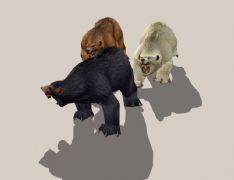 三头猛熊3D模型