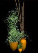 漂亮的竹子装饰