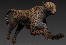 真实高精度豹子带动作