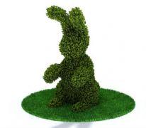 兔子造型园艺植物