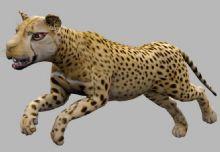 豹子带绑定