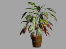 彩色叶子植物盆景