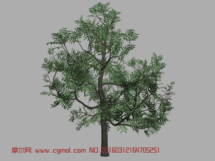 黄连木,楷木,楷树,黄楝树,树木高模3d彩泥太空泥图片