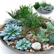 多肉植物盆栽3D模型