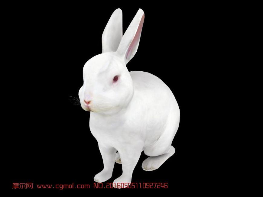 动物模型 哺乳动物  标签:兔子獭兔写实獭兔 作品描述:绝对原创模型
