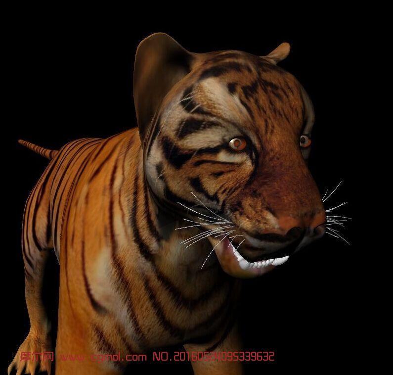 动物模型 哺乳动物  标签:老虎 作品描述:老虎模型 有贴图 布线规整