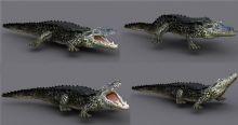 影视级别鳄鱼3D模型,绑定,动画