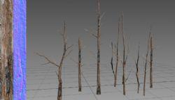 造型各异的枯枝烂木