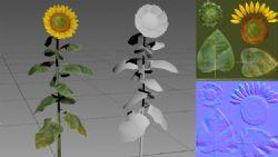 向日葵max模型