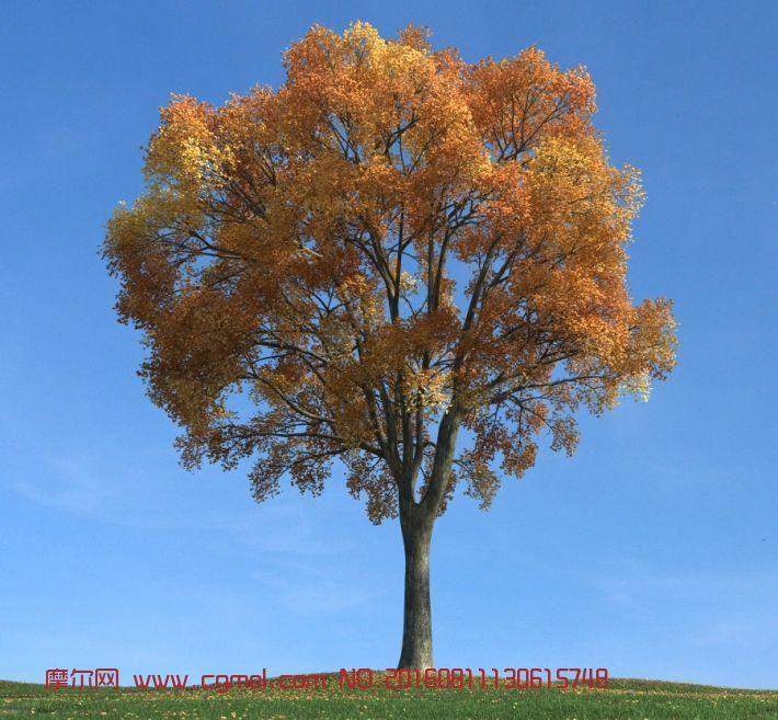 秋天树叶发黄
