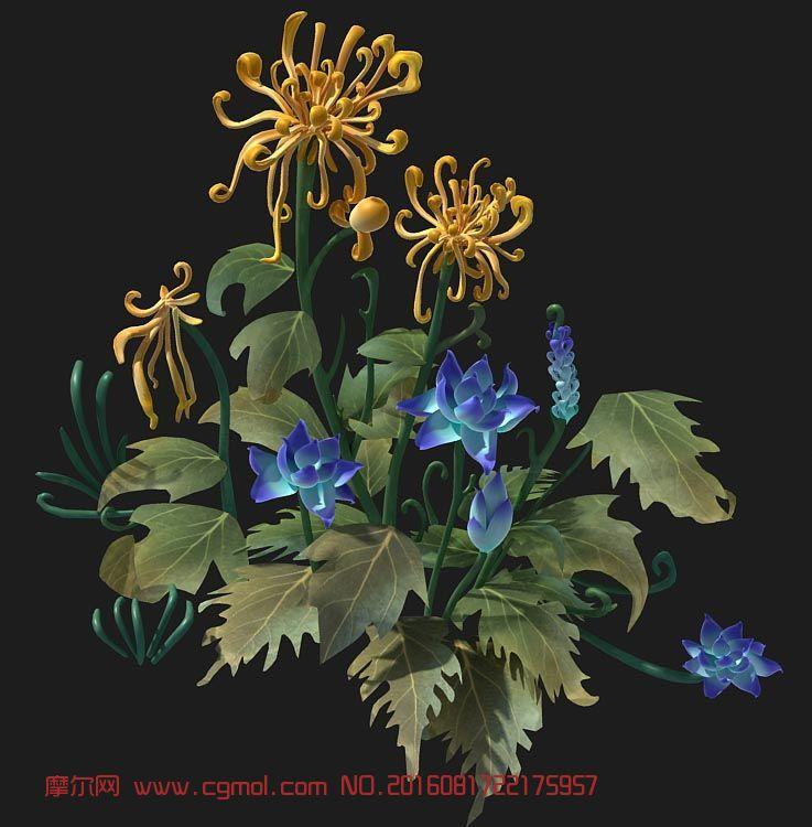 沙漠菊花,冰蓝花植物