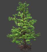高精细松树,青松3D模型