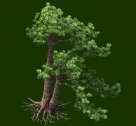 两个高低松树精细模型
