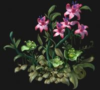 沙漠奇特绿粉双色植物