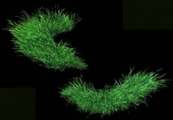 两款草地,草皮3D模型