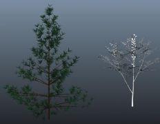 一棵简单的松树maya模型
