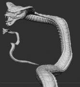 凶狠的蟒蛇zbrush模型,带max格式,有贴图