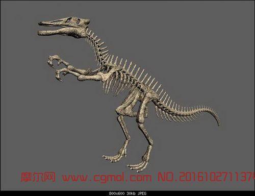 动物模型 爬行动物  标签:恐龙骨骼骨架 作品描述: 作者其他作品 上一