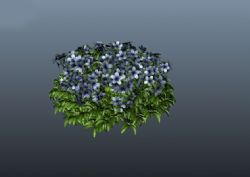 花团锦簇盆栽