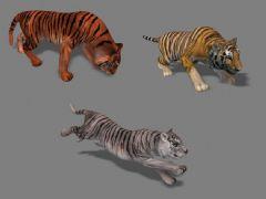 影视级老虎带全套动画