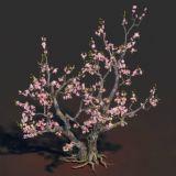精致桃花树,网盘下载
