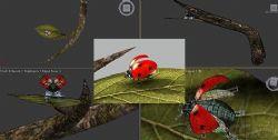 瓢虫,飞行动画