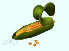 玉米及剥开动画